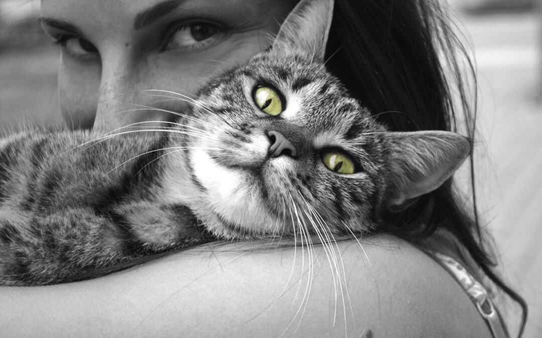 Forkæl dig selv og din kat
