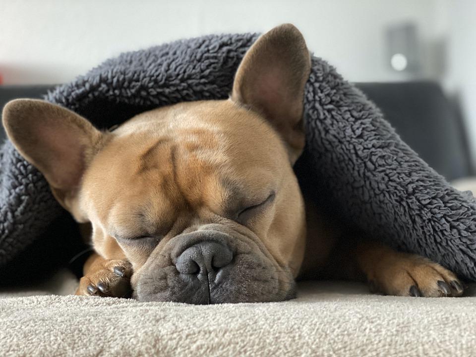 Hund_tæppe