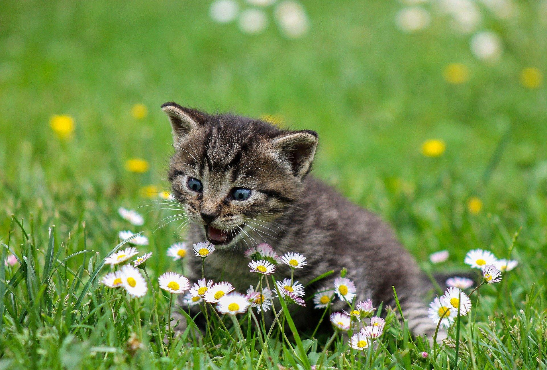 en kat i haven der leger med blomster