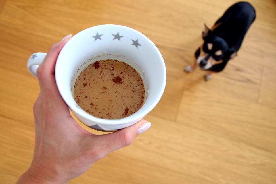 kaffekop og hund