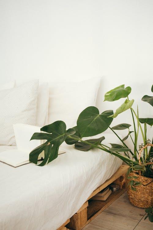 Seng og plante